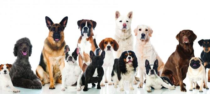 Hund und Katze bzw. Mehrhundehaltung!