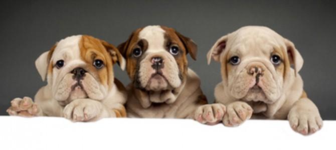Welpen und Junghunde – ein gutes Team von Anfang an!