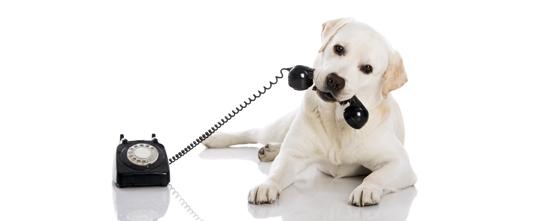 dog_callin